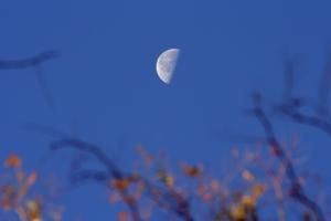 moon-last-quarter1